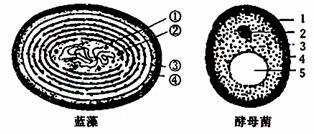 木质纤维素 真菌的分解原理_木质纤维素